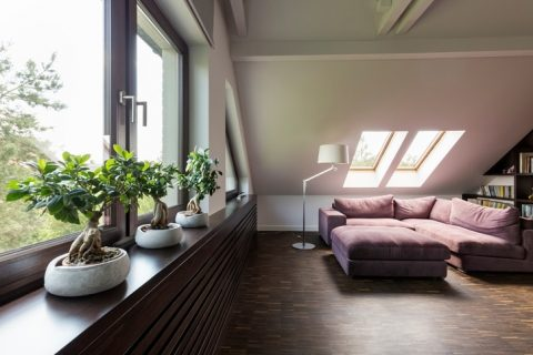 loft style living room with three bonsai trees on the window sill