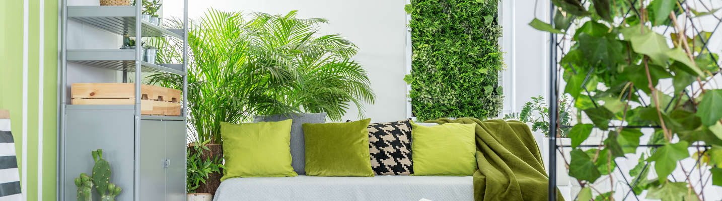 How to create an indoor oasis