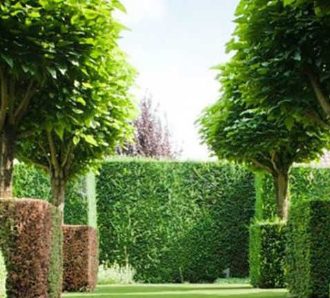 Artificial grass around tapestry hedging