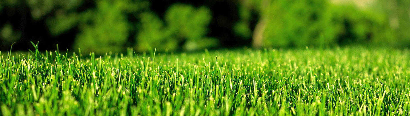 soft artificial grass