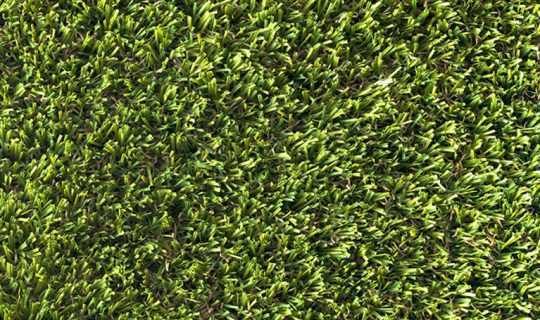 Birds eye view of dark green grass