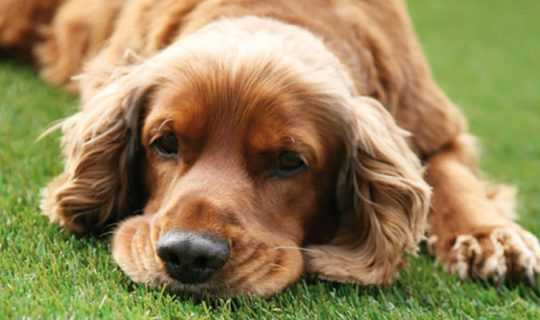 Dog sleeping on fake grass