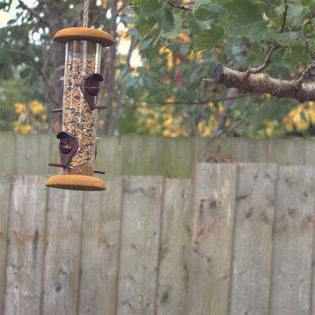 Bird feeder hanging from a tree