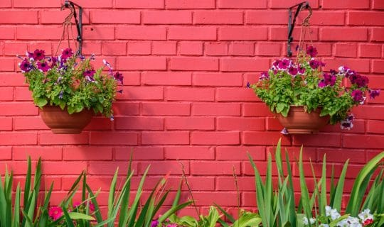 bright pink wall with plants