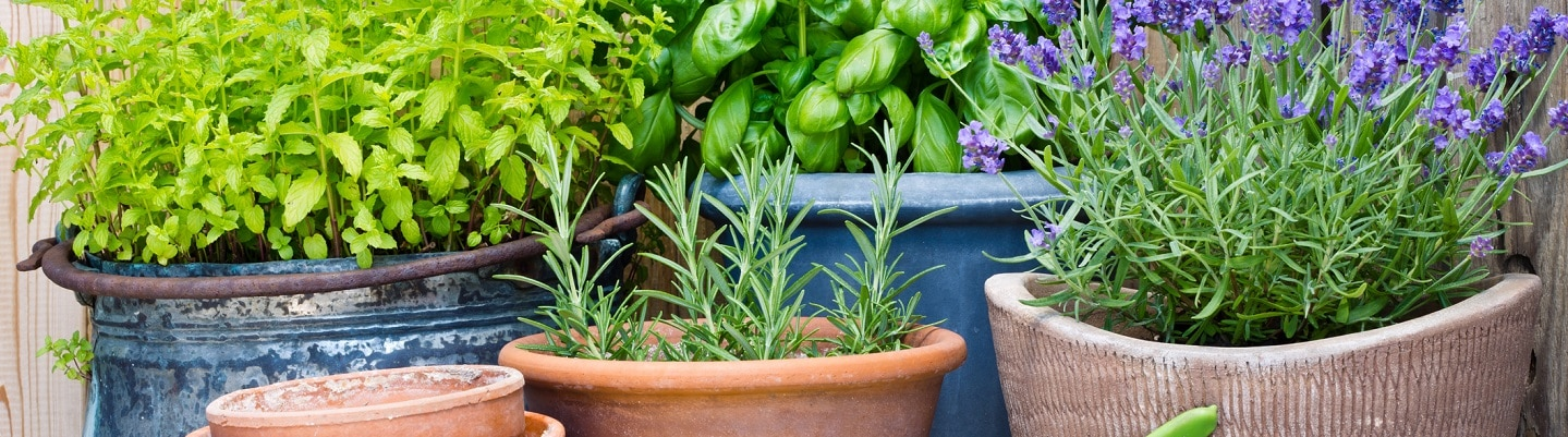 Easy Small Garden Design Updates