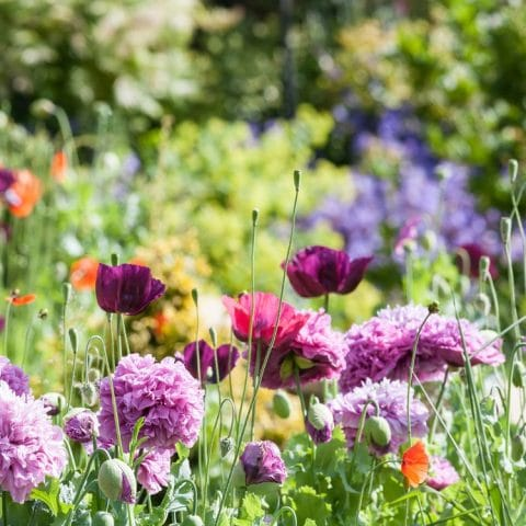 5 Instagrammable Flowers for your Garden