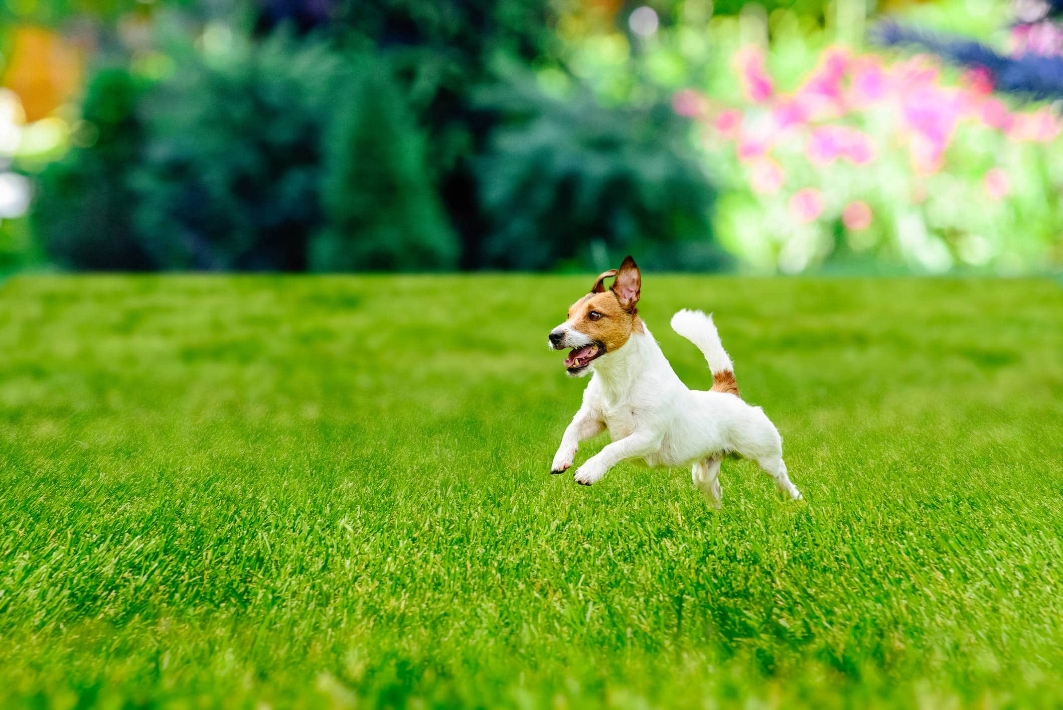 What Plants are Poisonous to Dogs? | Garden Inspo | Namgrass