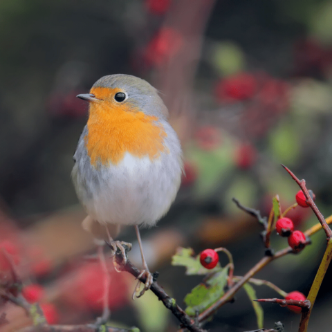 How to Make your Garden Festive for Christmas