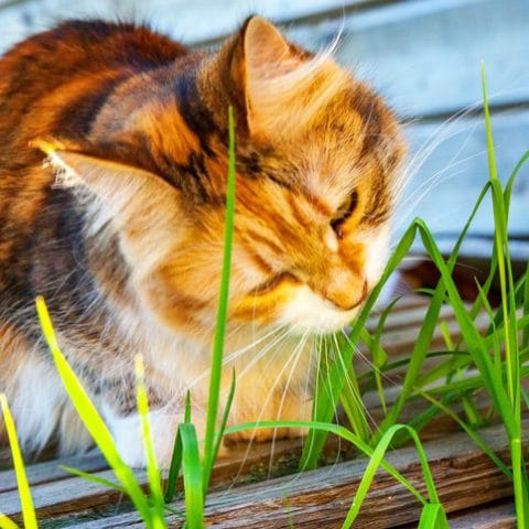 How to create a pet friendly garden