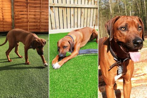 Discover landscape dog